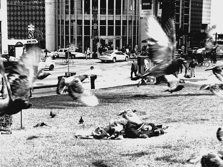 Pigeons swirl past a homeless man asleep on the grass along Geary Street in San Francisco.  Lydia Gans photo